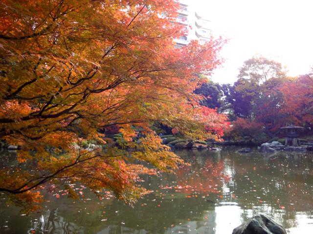 都立庭園紅葉めぐり(1)