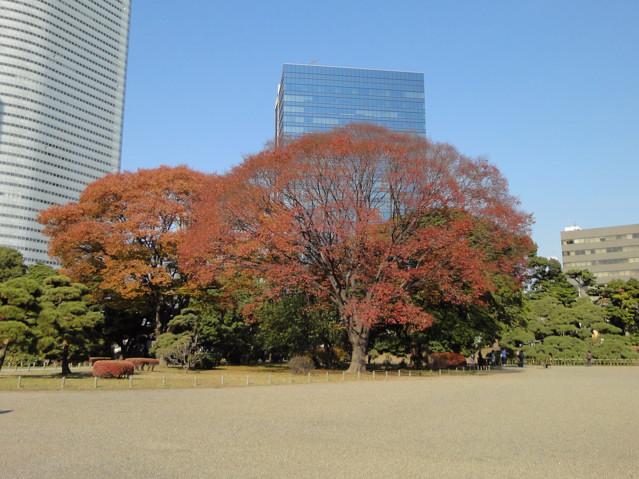 都立庭園紅葉めぐり(2)