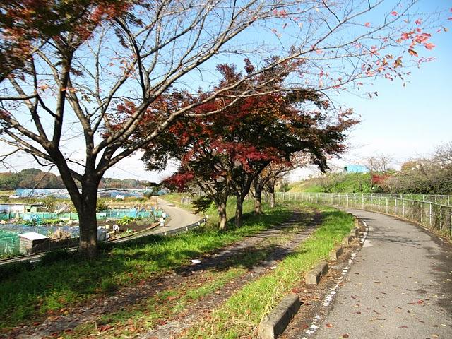 川口-菖蒲町(ヘルシーロード)